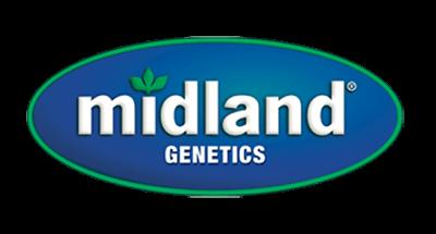 Midland Genetics